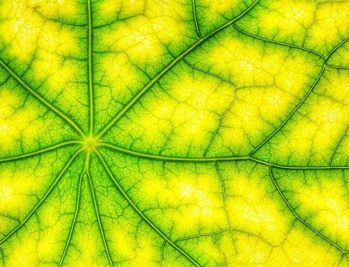 CRISPR en plantas